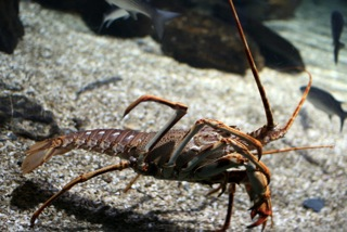 Development of conceptual population models for the harvesting of freshwater crayfish
